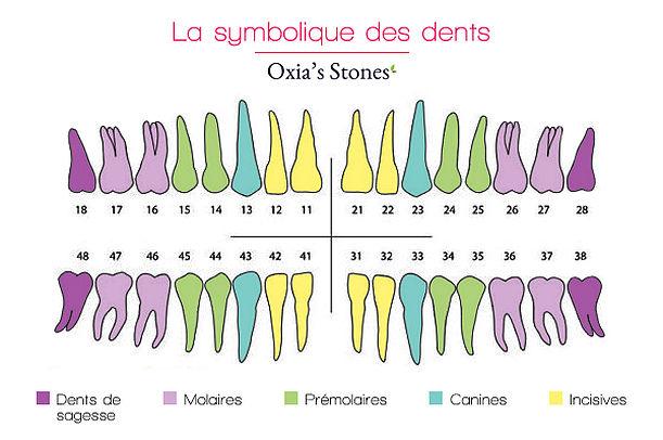 symbolisme-des-dents