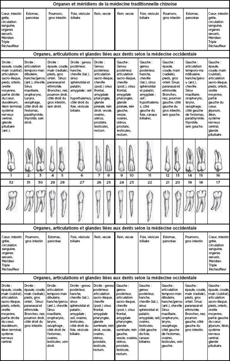 correspondance énergétique dents organes