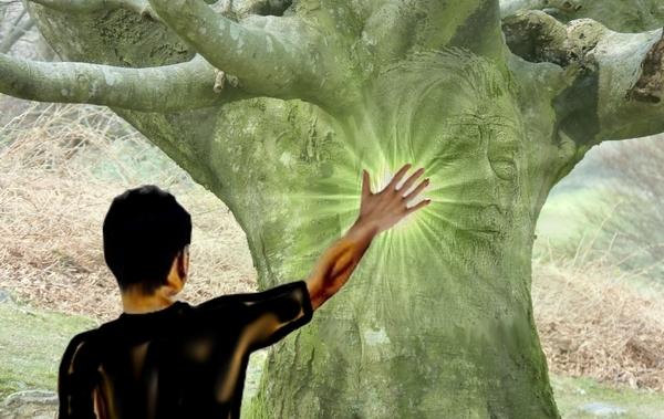 parler aux arbres